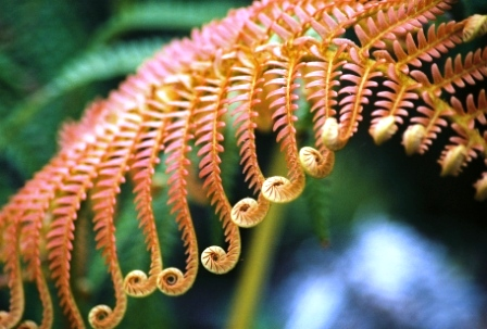 natural form - Google Search | Year 7 natural forms | Pinterest