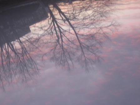 reflection-in-car-roof
