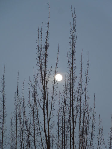 winter moon 01