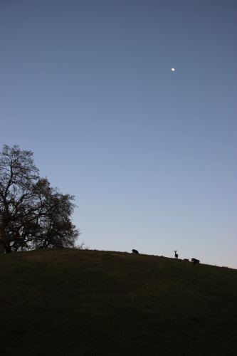 moon oak and deer