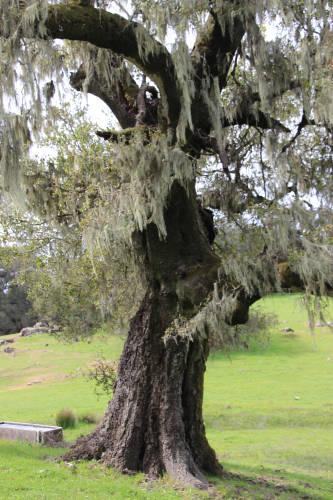 mossy oak real 001