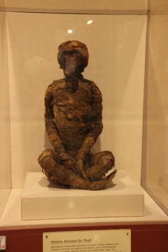 museum baboon mummy