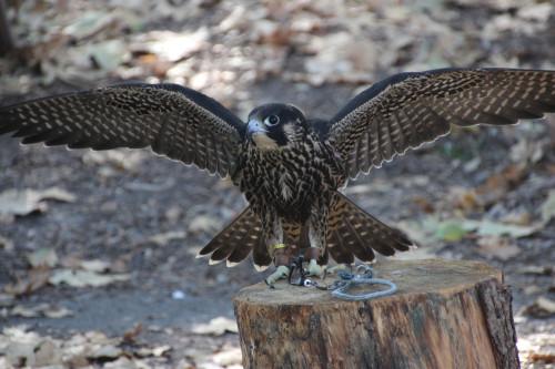 wingspan 001