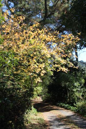foliage 001