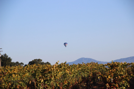 h_l balloon and vineyard 001