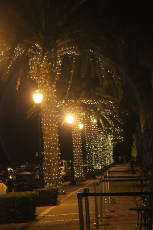 palm trees with twinkle lights 001