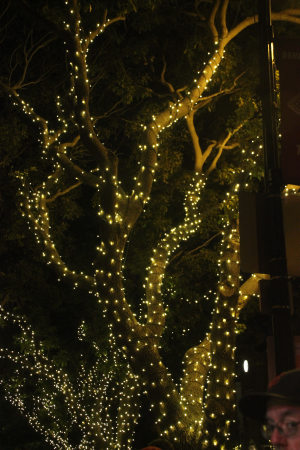 tree with twinkle lights 001