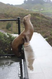 Welcoming seal statue at the Marine Mammal Center