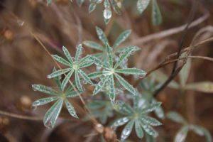 Weeds with dew drops