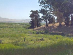 Landscape with trees, south of Petaluma