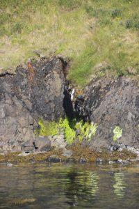 Videy Island Shoreline