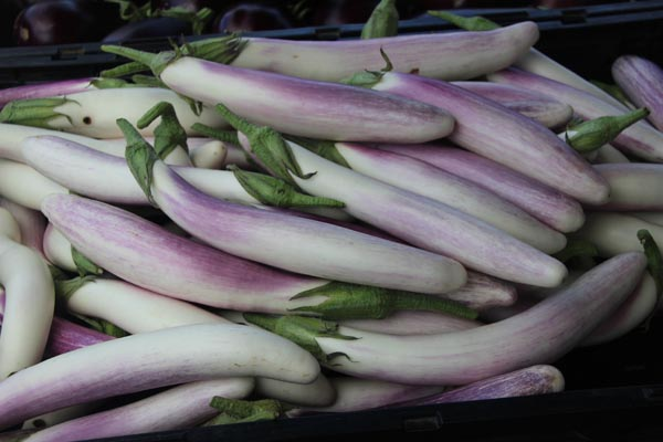 Japanese eggplant at the Sebastopol Farmers Market.