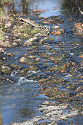 Rippling creek, rounded stones covered with moss.